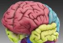 Компанија ќе чува мозоци за да копира спомени