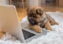 Вештачката интелигенција ќе ни овозможи комуникација со животните