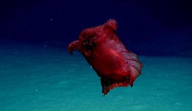 """На дното на Јужниот океан пронајдено """"Безглаво чудовиште""""!  (ВИДЕО)"""