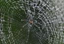 Необичен феномен: Забележан дожд од пајаци во Бразил (ВИДЕО)