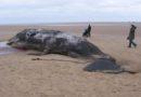 Морето на Сицилија исфрли кит полн со пластика