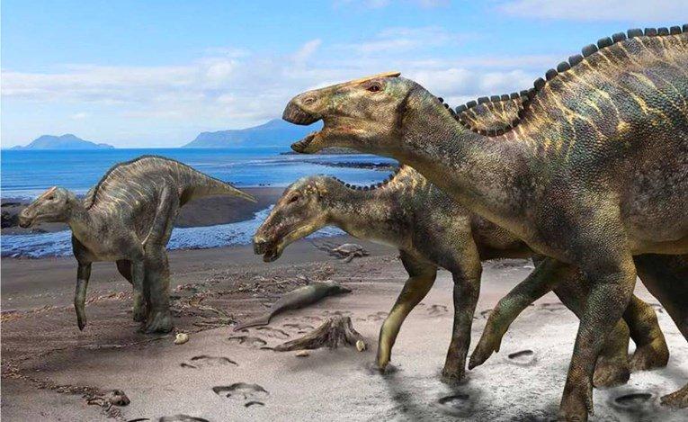 Во Јапонија откриен целосно нов вид диносаурус