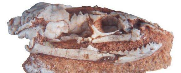 Откриен фосил на мистериозна змија со нозе