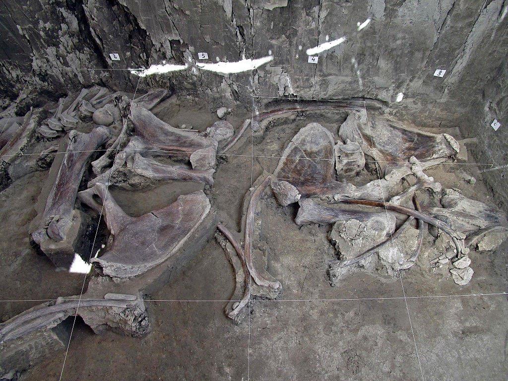 Пронајдени коски од 14 мамути стари 14.000 години