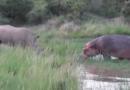 Овој вид на животни е спасен од целосно истребување (ВИДЕО)