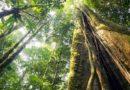 Huawei користи вештачка интелигенција за заштита на шумите