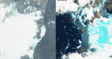 Топлотниот бран го стопи Антарктикот, а загрозени се и пингвините