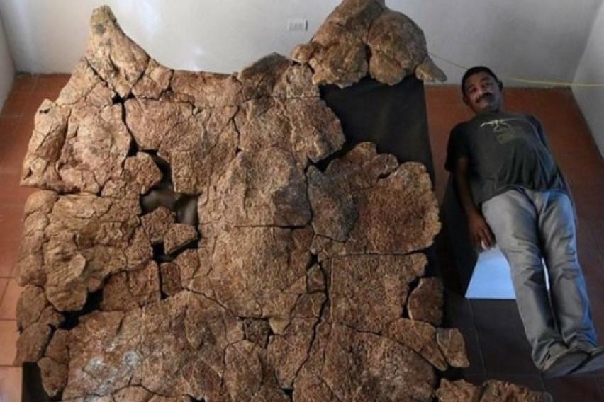 Пронајдени фосили од желки со големина на автомобил кои живееле пред 13 милиони години