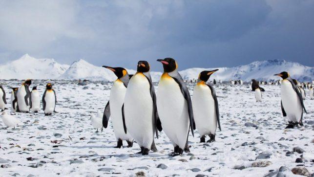 Се намалува бројот на пингвини на Антарктикот