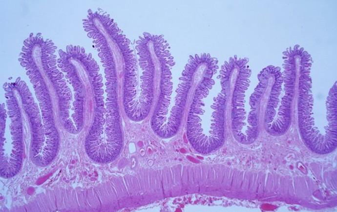 Откриен нов орган кој се протега низ целото тело