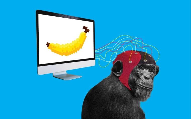 Neuralink на Eлон Маск вгради имплант во мозок на мајмун за да игра видео-игри (ВИДЕО)